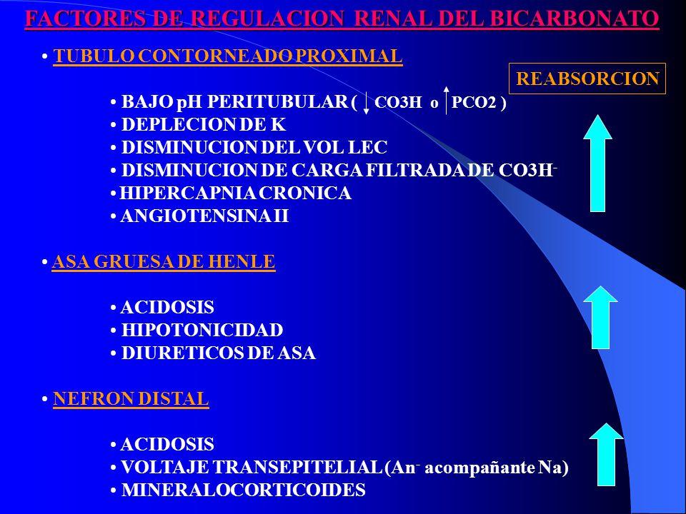 FACTORES DE REGULACION RENAL DEL BICARBONATO FACTORES DE REGULACION RENAL DEL BICARBONATO TUBULO CONTORNEADO PROXIMAL BAJO pH PERITUBULAR ( CO3H o PCO2 ) DEPLECION DE K DISMINUCION DEL VOL LEC DISMINUCION DE CARGA FILTRADA DE CO3H - HIPERCAPNIA CRONICA ANGIOTENSINA II ASA GRUESA DE HENLE ACIDOSIS HIPOTONICIDAD DIURETICOS DE ASA NEFRON DISTAL ACIDOSIS VOLTAJE TRANSEPITELIAL (An - acompañante Na) MINERALOCORTICOIDES REABSORCION