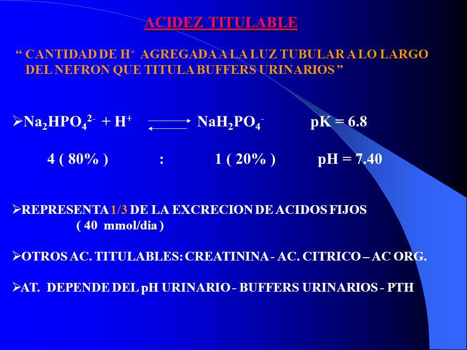 Na 2 HPO 4 2- + H + NaH 2 PO 4 - pK = 6.8 4 ( 80% ) : 1 ( 20% ) pH = 7.40 REPRESENTA 1/3 DE LA EXCRECION DE ACIDOS FIJOS ( 40 mmol/dia ) OTROS AC.