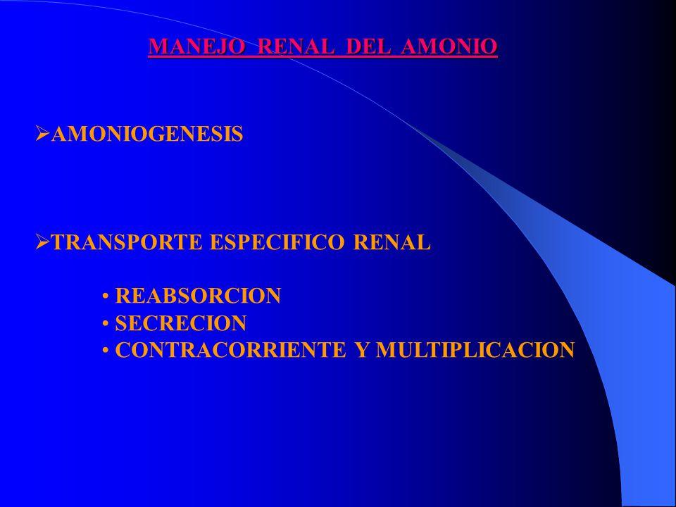 MANEJO RENAL DEL AMONIO AMONIOGENESIS TRANSPORTE ESPECIFICO RENAL REABSORCION SECRECION CONTRACORRIENTE Y MULTIPLICACION