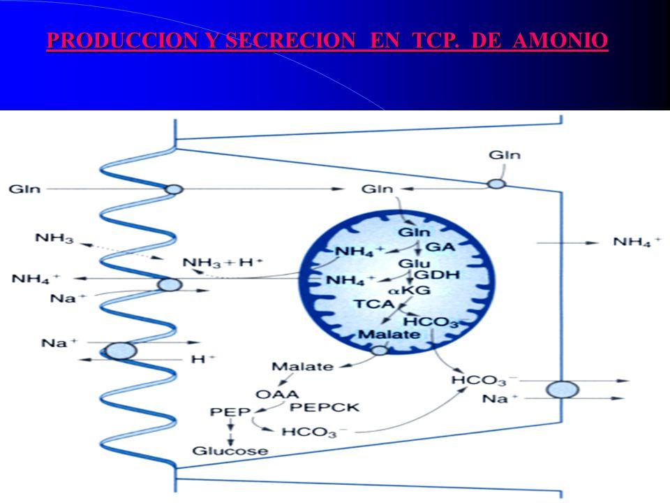 PRODUCCION Y SECRECION EN TCP. DE AMONIO