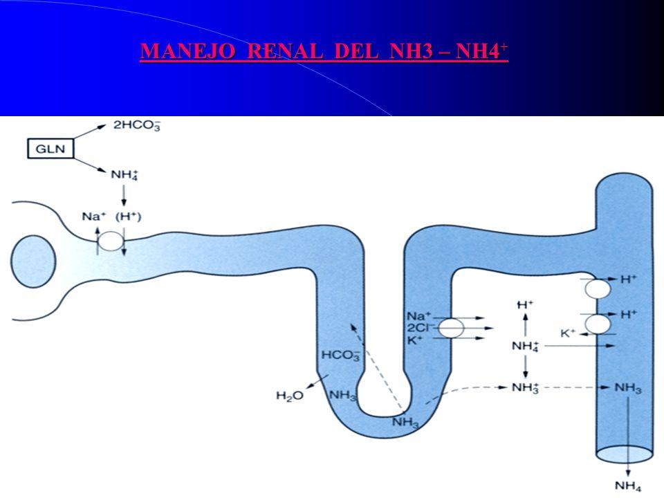 MANEJO RENAL DEL NH3 – NH4 +