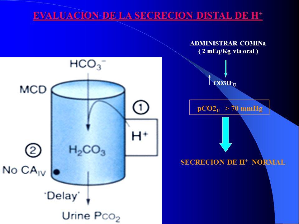 EVALUACION DE LA SECRECION DISTAL DE H + pCO2 U > 70 mmHg SECRECION DE H + NORMAL ADMINISTRAR CO3HNa ( 2 mEq/Kg via oral ) CO3H - U