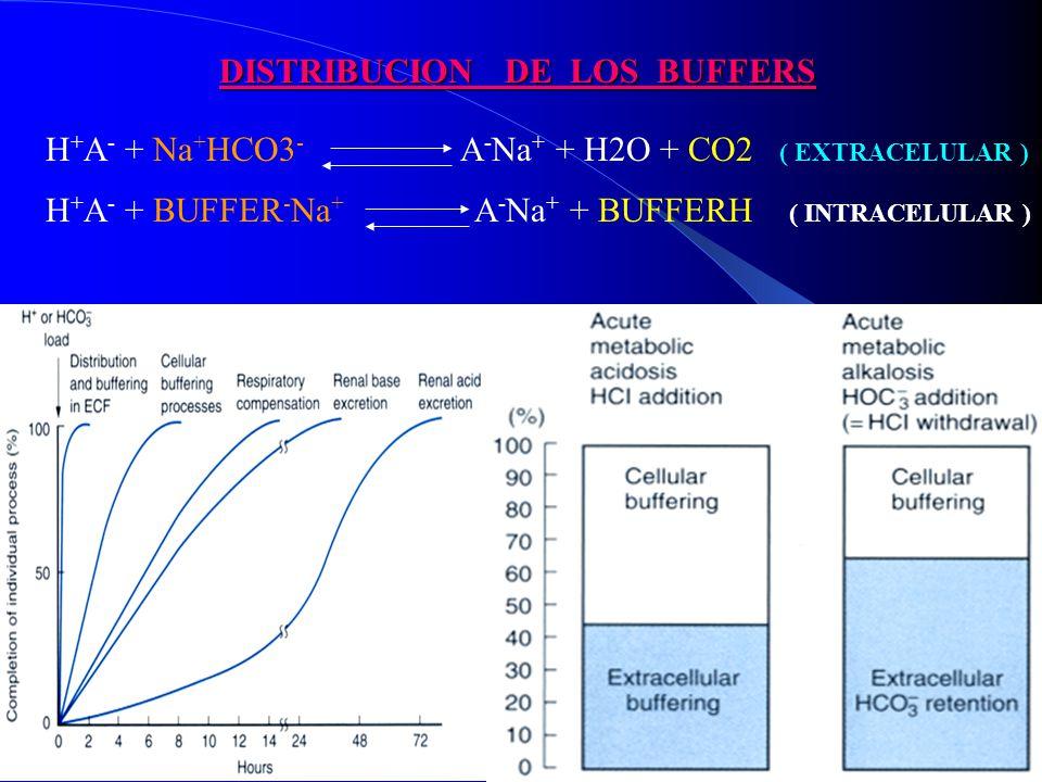 H + A - + Na + HCO3 - A - Na + + H2O + CO2 ( EXTRACELULAR ) DISTRIBUCION DE LOS BUFFERS H + A - + BUFFER - Na + A - Na + + BUFFERH ( INTRACELULAR )