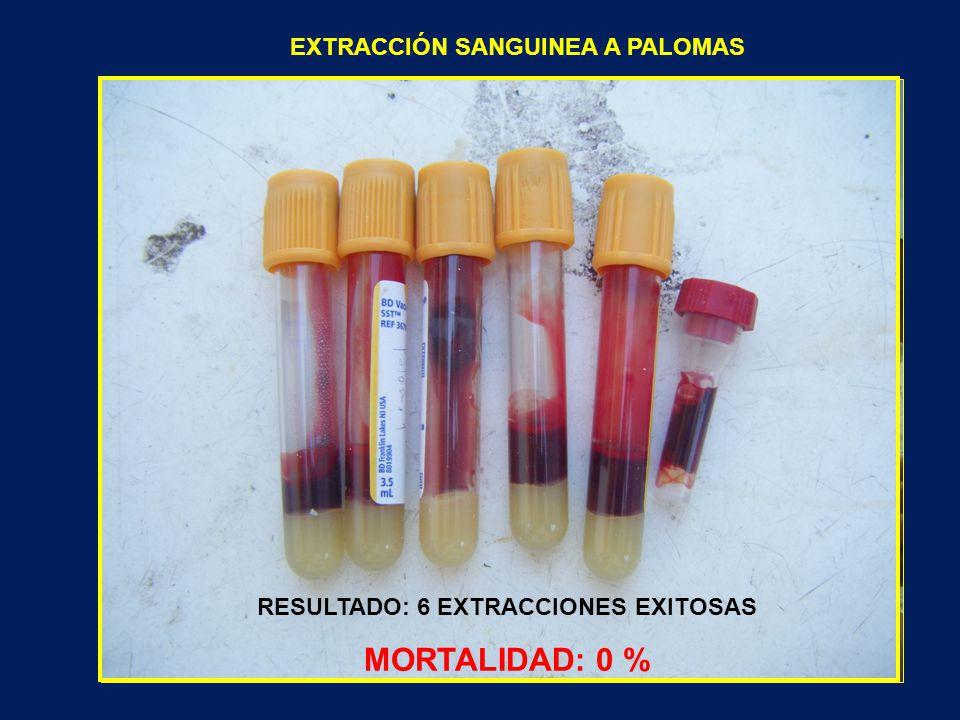 EXTRACCIÓN SANGUINEA A PALOMAS RESULTADO: 6 EXTRACCIONES EXITOSAS MORTALIDAD: 0 %