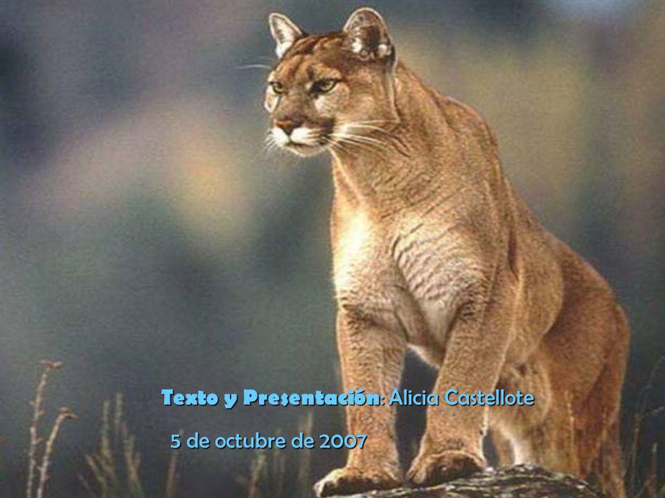 http://es.youtube.com/watch v=Nbk3ZKdmP6E&mode=related&searchhttp://es.youtube.com/watch v=Nbk3ZKdmP6E&mode=related&search= Los Pumas entonando nuestro Himno Nacional