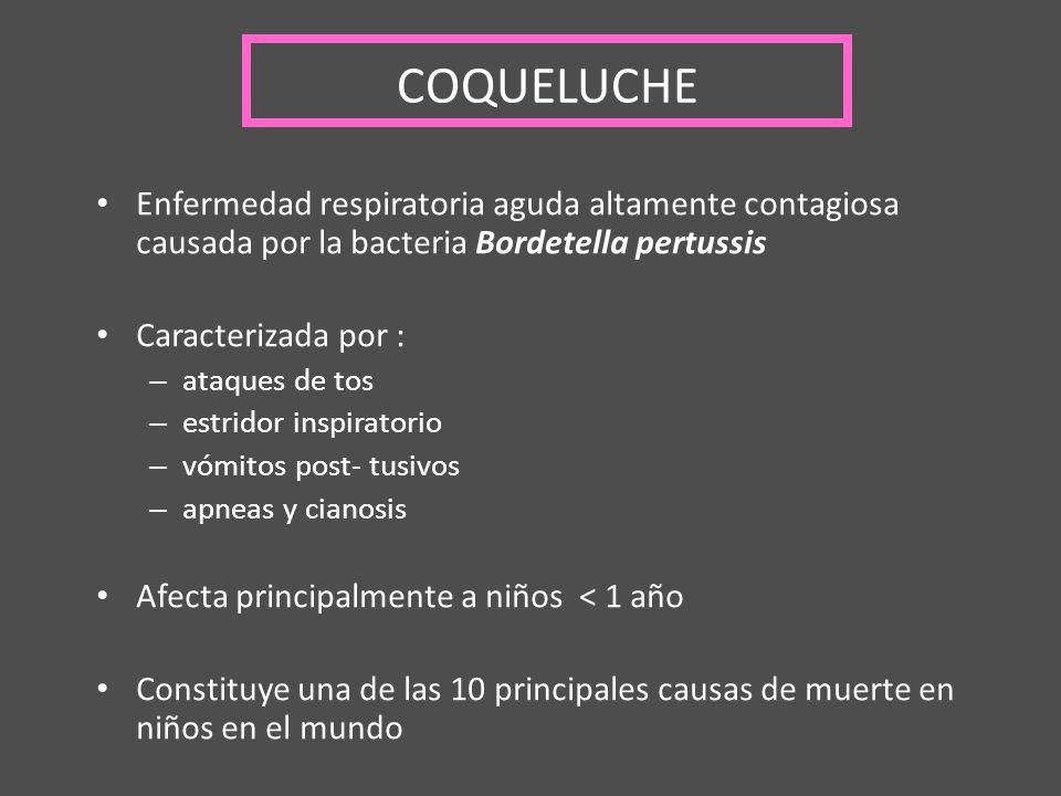 COQUELUCHE Enfermedad respiratoria aguda altamente contagiosa causada por la bacteria Bordetella pertussis Caracterizada por : – ataques de tos – estr