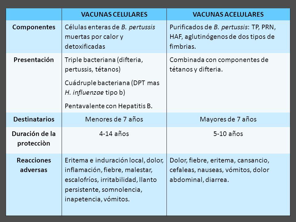 Vacunas VACUNAS CELULARESVACUNAS ACELULARES Componentes Células enteras de B. pertussis muertas por calor y detoxificadas Purificados de B. pertussis: