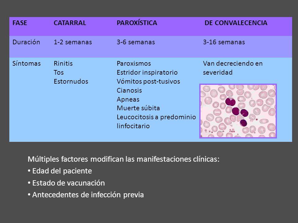 FASECATARRALPAROXÍSTICA DE CONVALECENCIA Duración1-2 semanas3-6 semanas3-16 semanas SíntomasRinitis Tos Estornudos Paroxismos Estridor inspiratorio Vó