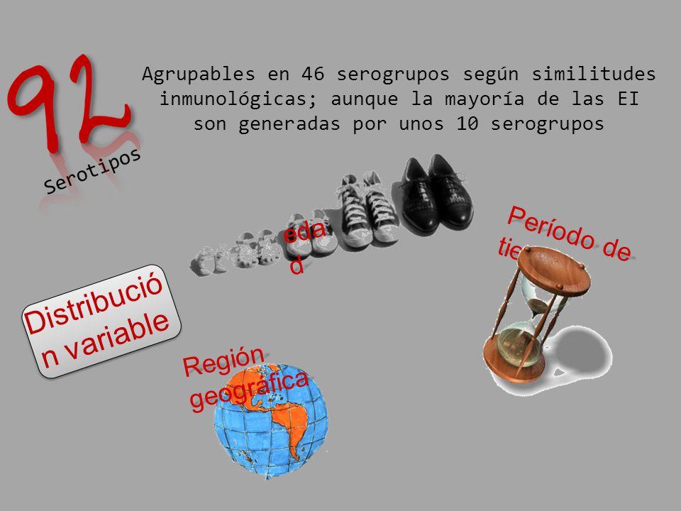 Agrupables en 46 serogrupos según similitudes inmunológicas; aunque la mayoría de las EI son generadas por unos 10 serogrupos Distribució n variable e