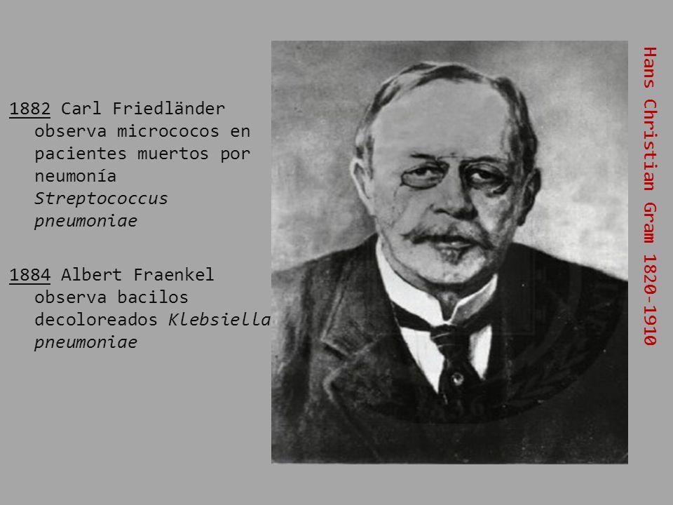 1882 Carl Friedländer observa micrococos en pacientes muertos por neumonía Streptococcus pneumoniae 1884 Albert Fraenkel observa bacilos decoloreados