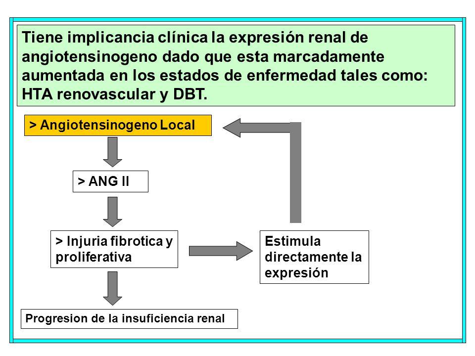 Tiene implicancia clínica la expresión renal de angiotensinogeno dado que esta marcadamente aumentada en los estados de enfermedad tales como: HTA renovascular y DBT.