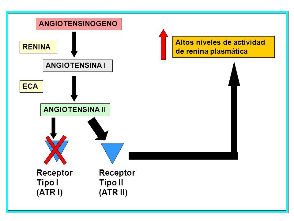 ANGIOTENSINOGENO ANGIOTENSINA I ECA RENINA Receptor Tipo I (ATR I) Altos niveles de actividad de renina plasmática ANGIOTENSINA II Receptor Tipo II (ATR II)