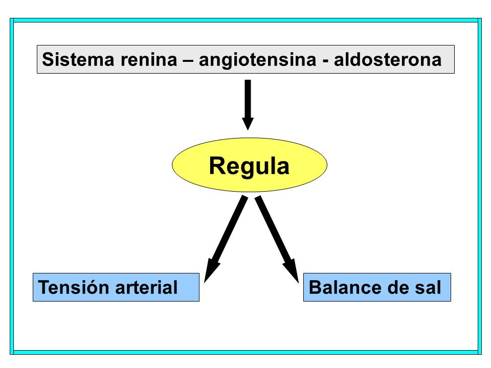 Sistema renina – angiotensina - aldosterona Regula Tensión arterialBalance de sal