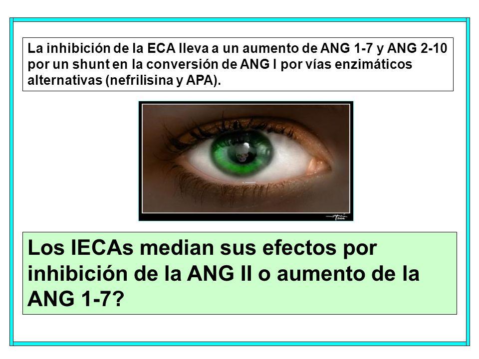 La inhibición de la ECA lleva a un aumento de ANG 1-7 y ANG 2-10 por un shunt en la conversión de ANG I por vías enzimáticos alternativas (nefrilisina y APA).