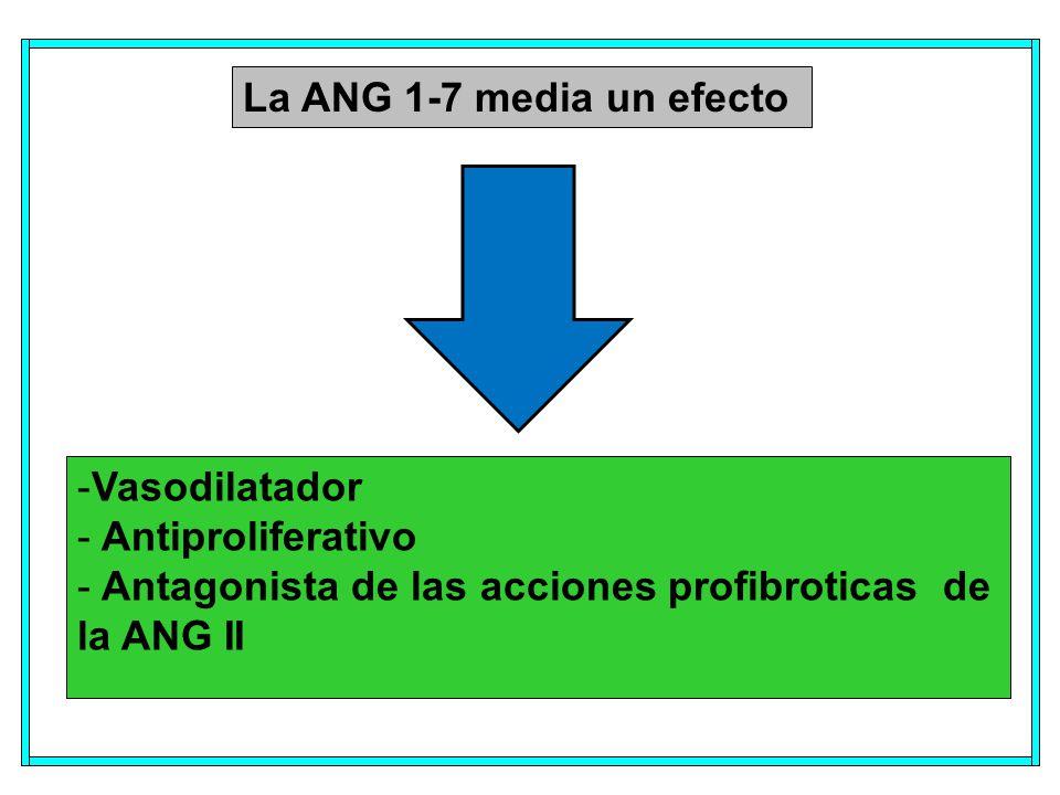 La ANG 1-7 media un efecto -Vasodilatador - Antiproliferativo - Antagonista de las acciones profibroticas de la ANG II