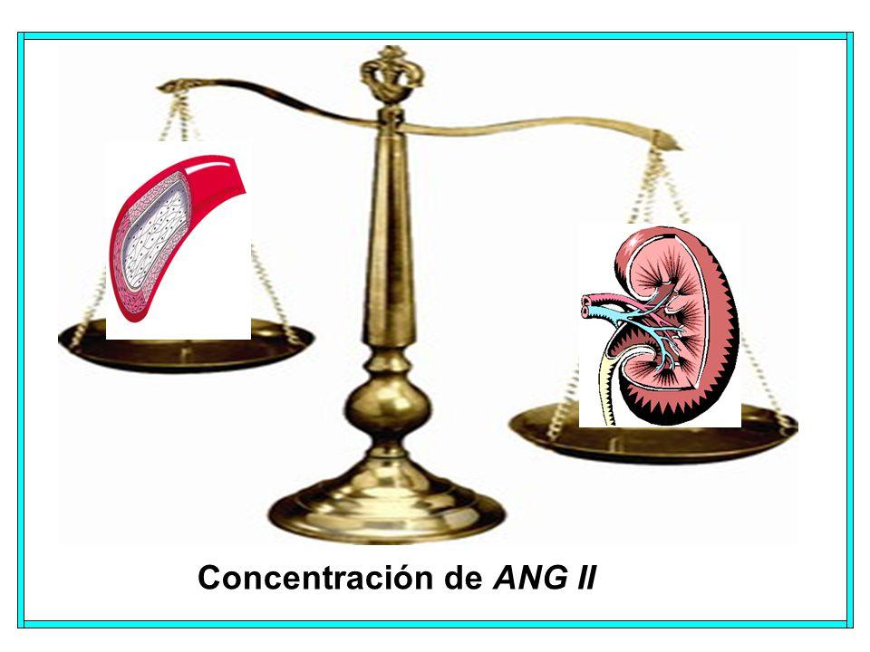 Concentración de ANG II