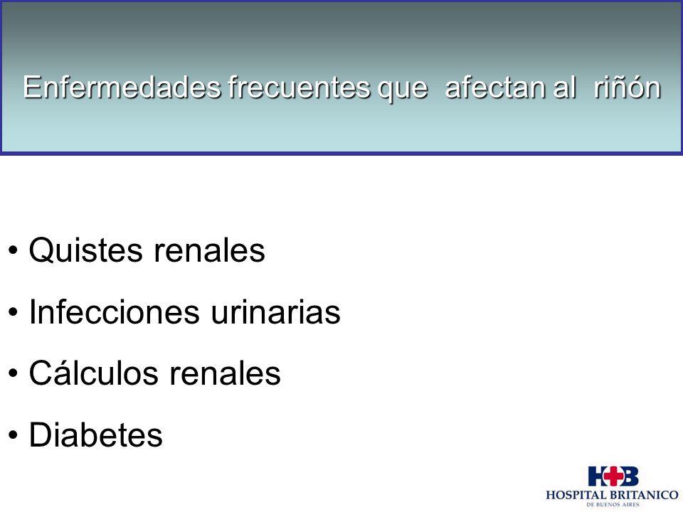 Enfermedades frecuentes que afectan al riñón Quistes renales Infecciones urinarias Cálculos renales Diabetes Enfermedades frecuentes que afectan al ri