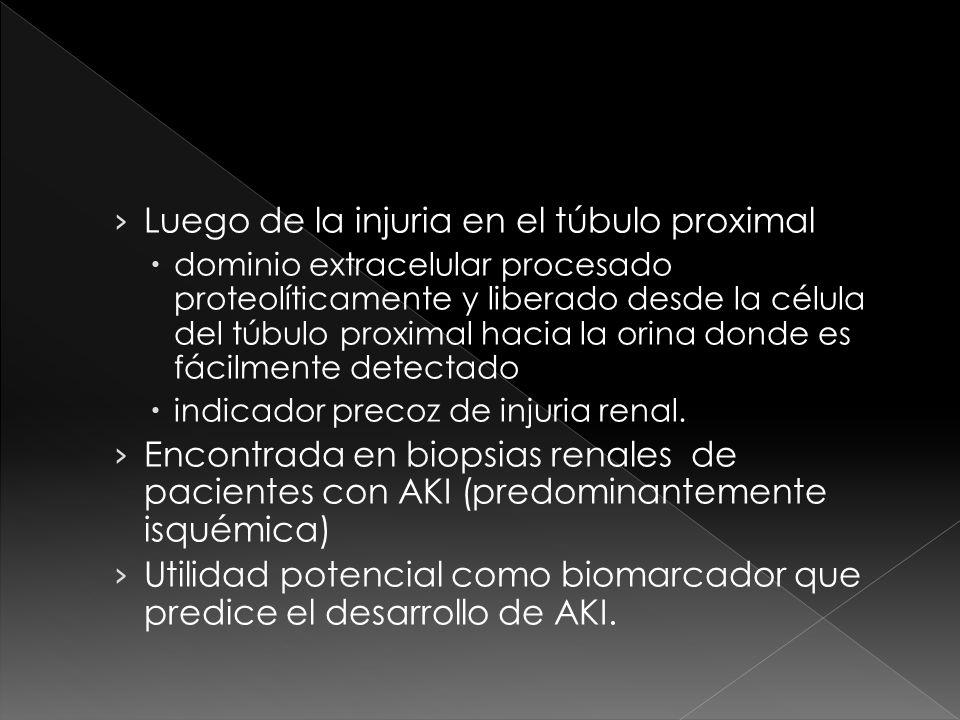 Luego de la injuria en el túbulo proximal dominio extracelular procesado proteolíticamente y liberado desde la célula del túbulo proximal hacia la orina donde es fácilmente detectado indicador precoz de injuria renal.