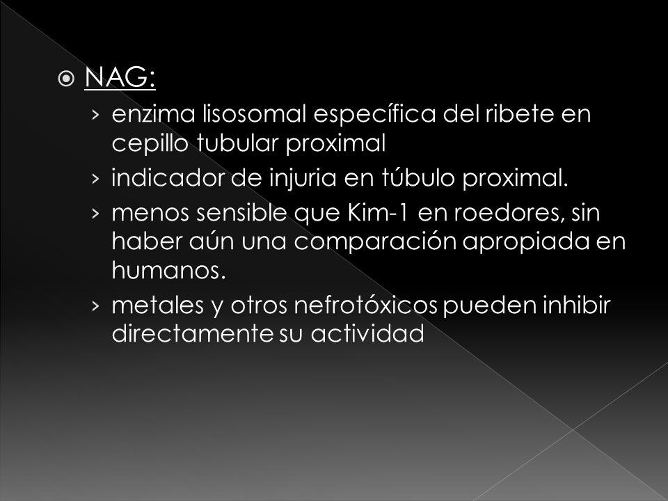 NAG: enzima lisosomal específica del ribete en cepillo tubular proximal indicador de injuria en túbulo proximal. menos sensible que Kim-1 en roedores,