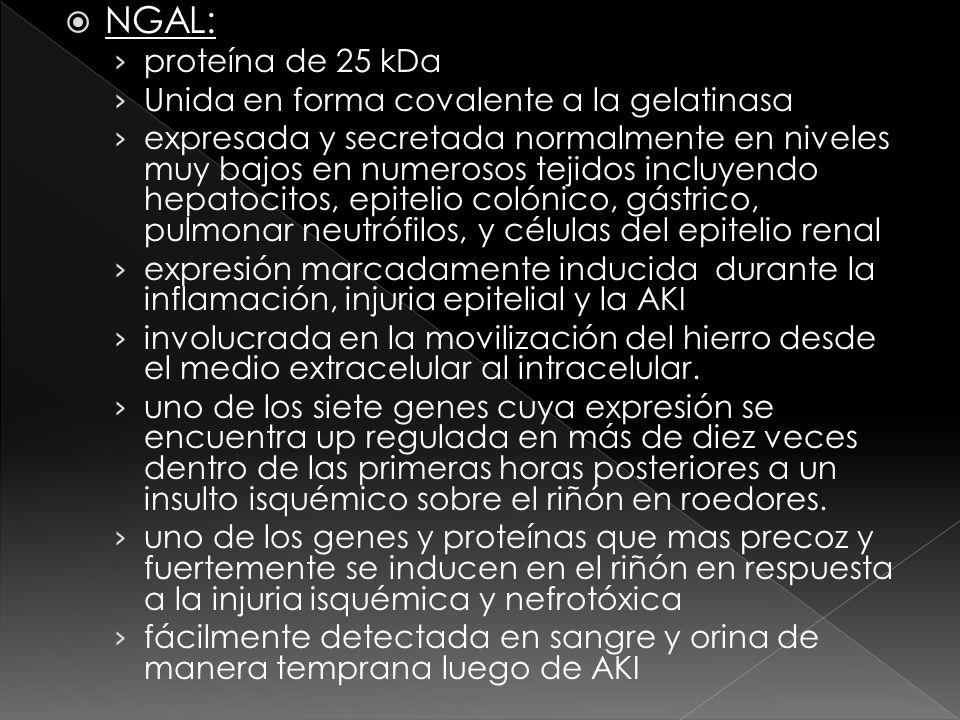 NGAL: proteína de 25 kDa Unida en forma covalente a la gelatinasa expresada y secretada normalmente en niveles muy bajos en numerosos tejidos incluyen