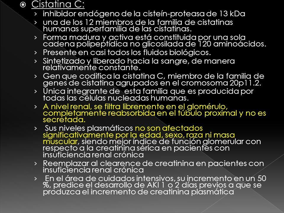 Cistatina C: inhibidor endógeno de la cisteín-proteasa de 13 kDa una de los 12 miembros de la familia de cistatinas humanas superfamilia de las cistatinas.