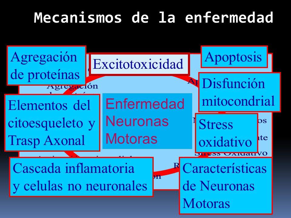Agregación de proteínas Excitotoxicidad Stress oxidativo Disfunción mitocondrial Elementos del citoesqueleto y Trasp Axonal Apoptosis Cascada inflamat