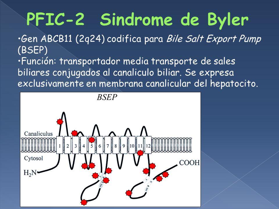 Gen ABCB11 (2q24) codifica para Bile Salt Export Pump (BSEP) Función: transportador media transporte de sales biliares conjugados al canaliculo biliar.