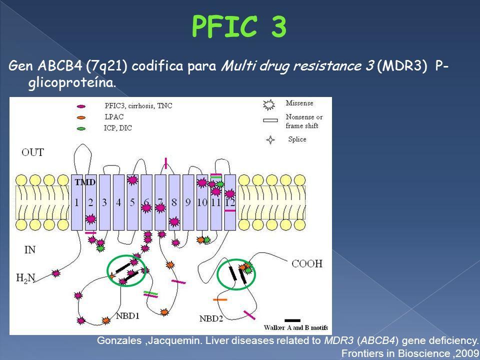 Gen ABCB4 (7q21) codifica para Multi drug resistance 3 (MDR3) P- glicoproteína.