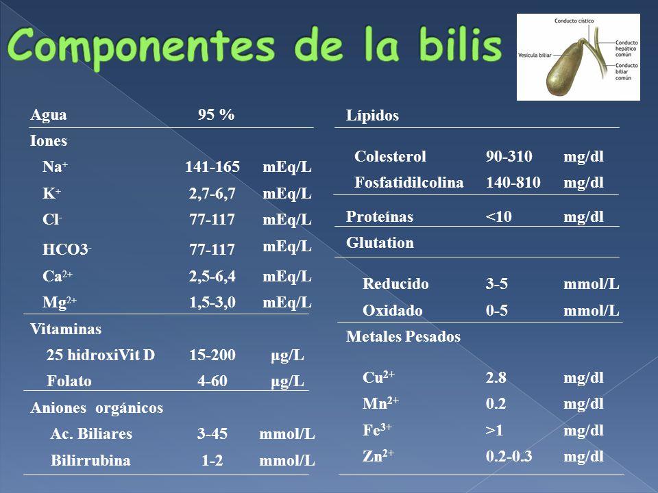 Agua 95 % Iones Na + 141-165mEq/L K + 2,7-6,7mEq/L Cl - 77-117mEq/L HCO3 - 77-117 mEq/L Ca 2+ 2,5-6,4mEq/L Mg 2+ 1,5-3,0mEq/L Vitaminas 25 hidroxiVit D15-200μg/L Folato4-60μg/L Aniones orgánicos Ac.
