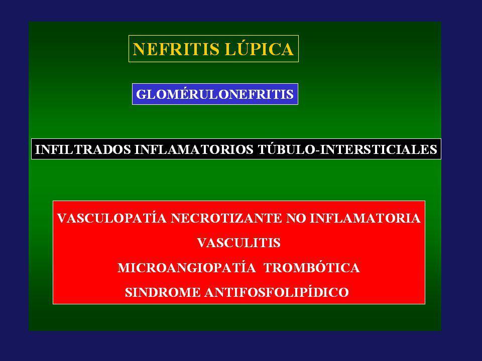 MICOFENOLATO MICOFENOLATO mofetil MICOFENOLATO sódico ACIDO MICOFENÓLICO