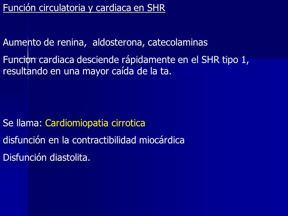 Función circulatoria y cardiaca en SHR Aumento de renina, aldosterona, catecolaminas Funcion cardiaca desciende rápidamente en el SHR tipo 1, resultan