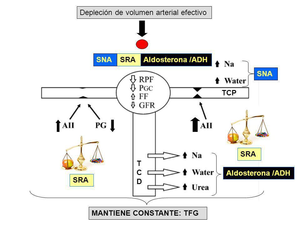 Depleción de volumen arterial efectivo SRA Aldosterona /ADH MANTIENE CONSTANTE: TFG Aldosterona /ADHSNA TCDTCD TCP