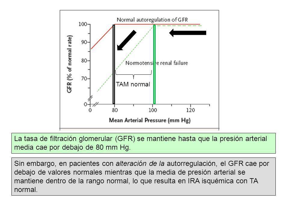 La tasa de filtración glomerular (GFR) se mantiene hasta que la presión arterial media cae por debajo de 80 mm Hg. Sin embargo, en pacientes con alter
