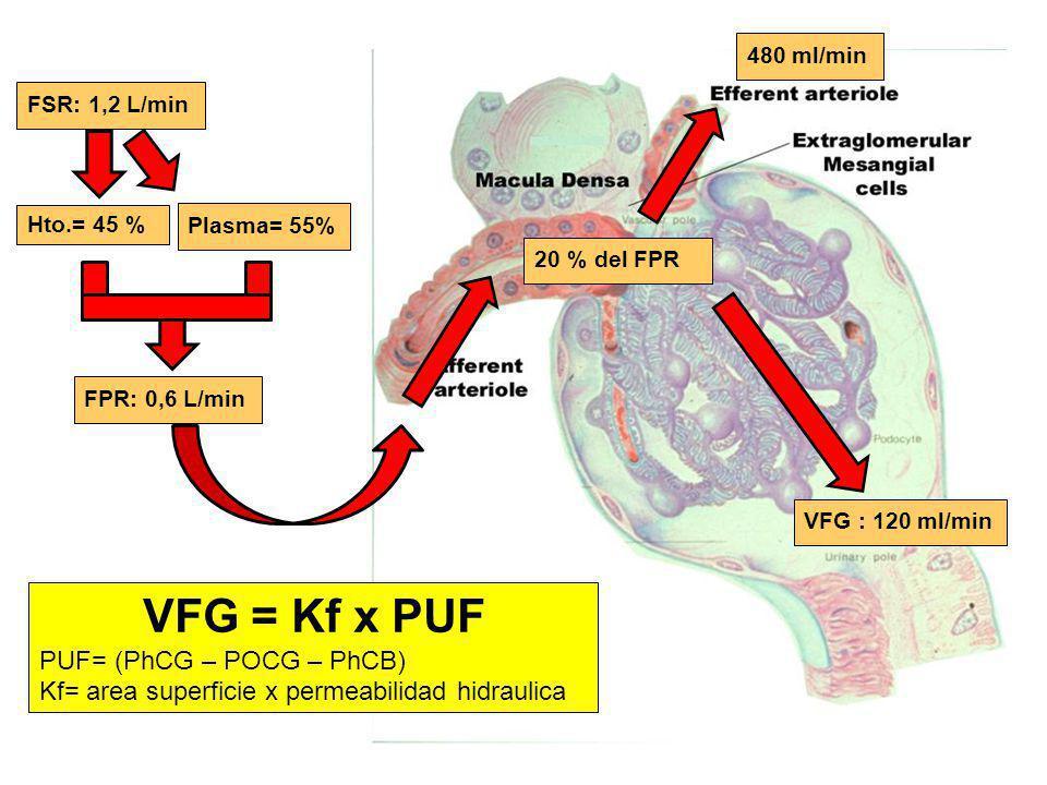 VFG : 120 ml/min FSR: 1,2 L/min Hto.= 45 % Plasma= 55% FPR: 0,6 L/min 20 % del FPR 480 ml/min VFG = Kf x PUF PUF= (PhCG – POCG – PhCB) Kf= area superf