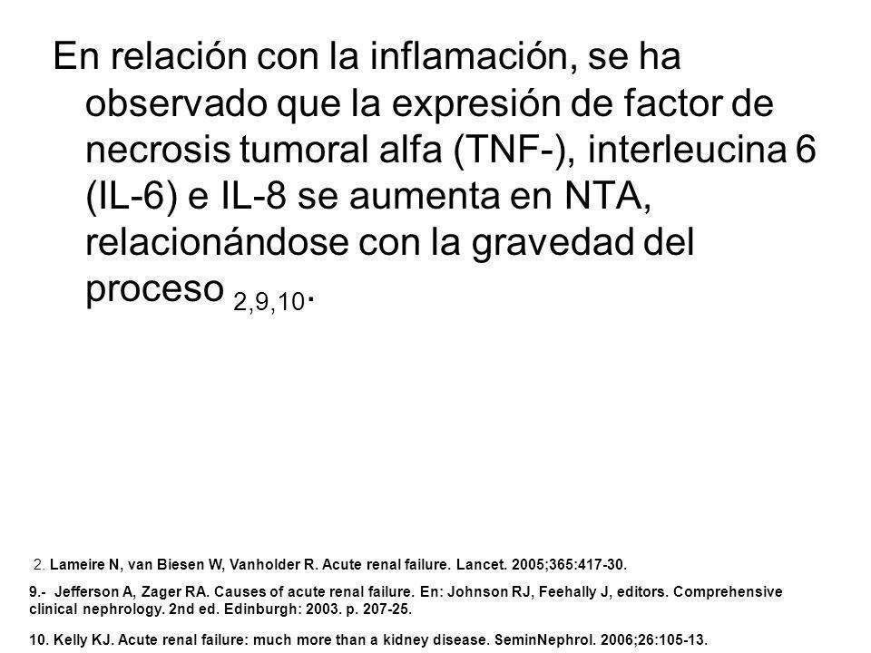 En relación con la inflamación, se ha observado que la expresión de factor de necrosis tumoral alfa (TNF-), interleucina 6 (IL-6) e IL-8 se aumenta en