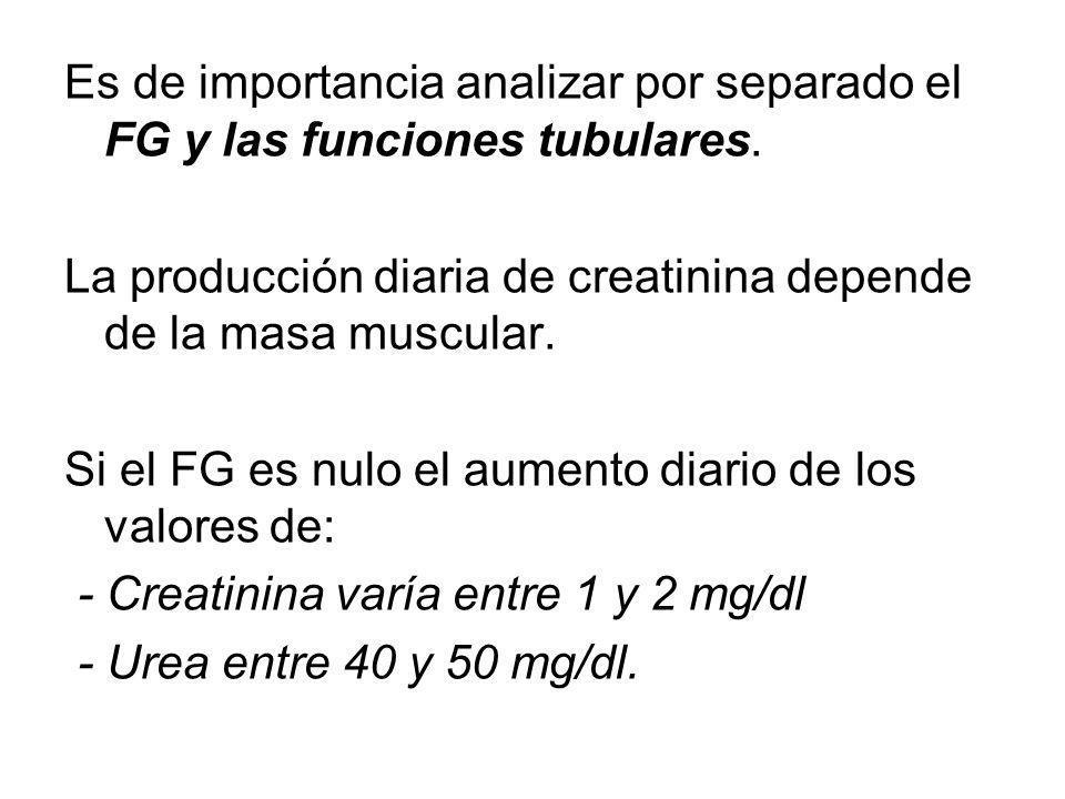 Es de importancia analizar por separado el FG y las funciones tubulares. La producción diaria de creatinina depende de la masa muscular. Si el FG es n