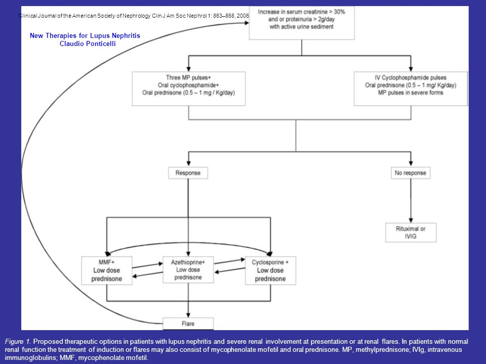 Figure 1. Proposed therapeutic options in patients with lupus nephritis and severe renal involvement at presentation or at renal flares. In patients w