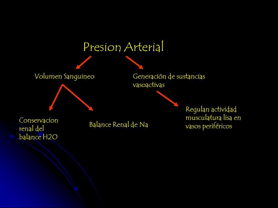 Presion Arterial Volumen SanguineoGeneración de sustancias vasoactivas Conservacion renal del balance H2O Balance Renal de Na Regulan actividad muscul