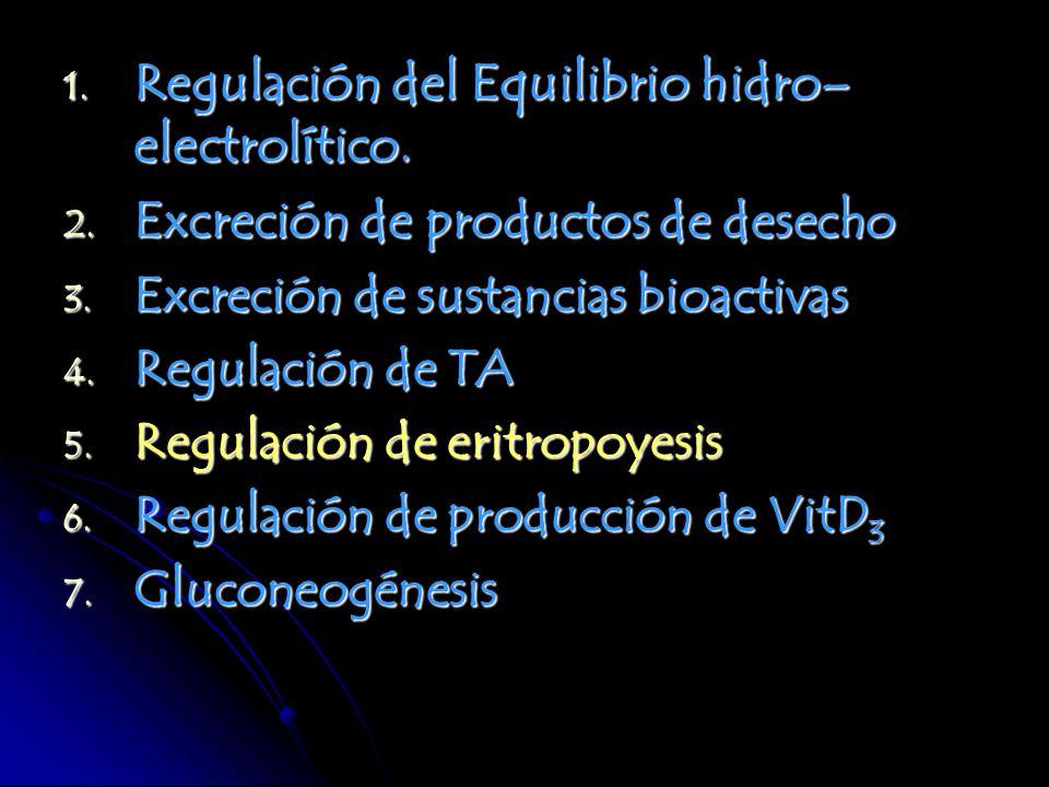 1. Regulación del Equilibrio hidro– electrolítico. 2. Excreción de productos de desecho 3. Excreción de sustancias bioactivas 4. Regulación de TA 5. R