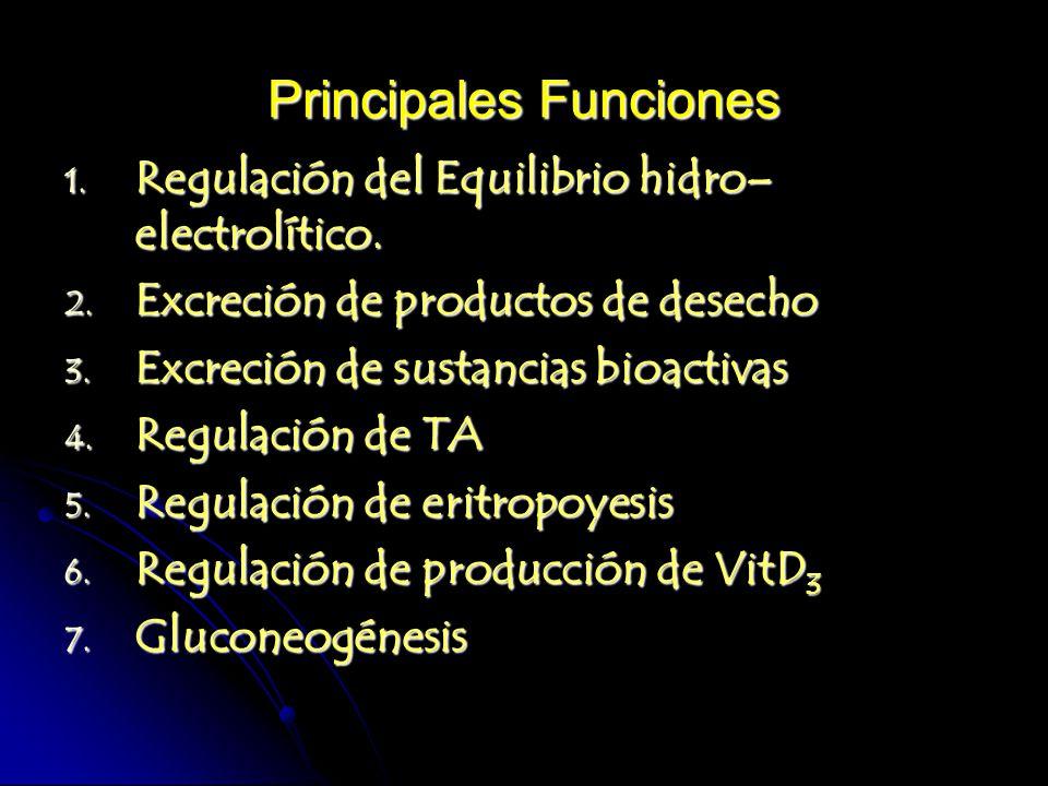 Principales Funciones 1. Regulación del Equilibrio hidro– electrolítico. 2. Excreción de productos de desecho 3. Excreción de sustancias bioactivas 4.