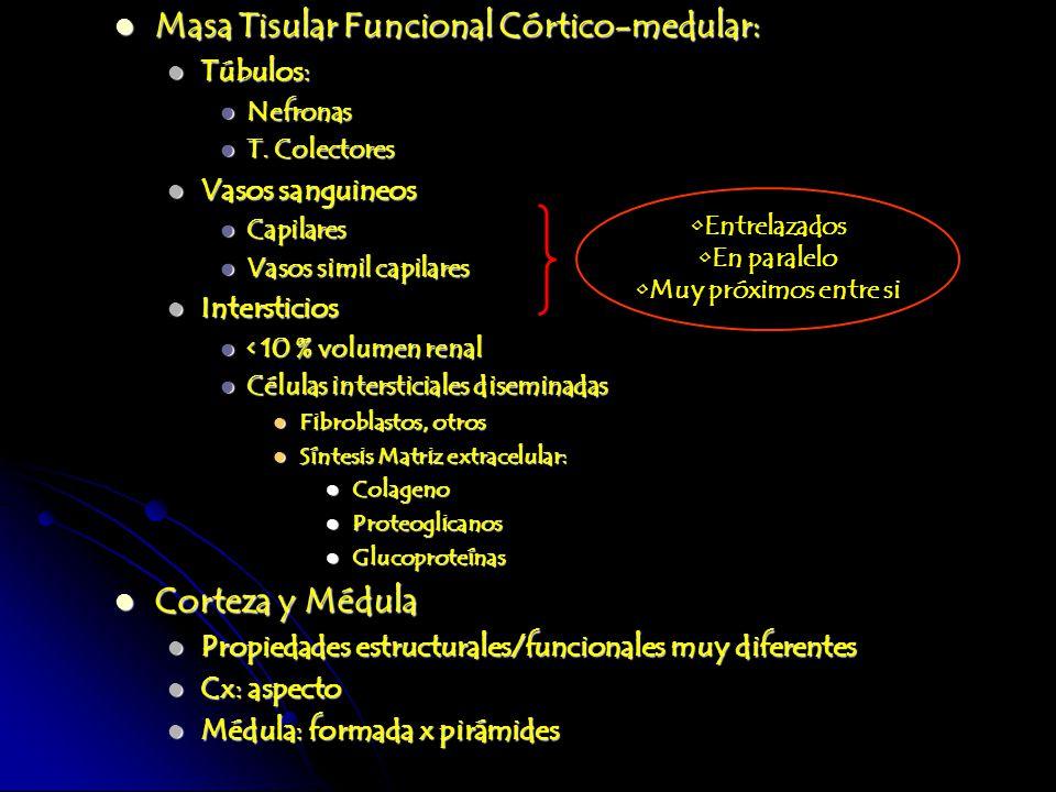 Masa Tisular Funcional Córtico-medular: Masa Tisular Funcional Córtico-medular: Túbulos: Túbulos: Nefronas Nefronas T. Colectores T. Colectores Vasos
