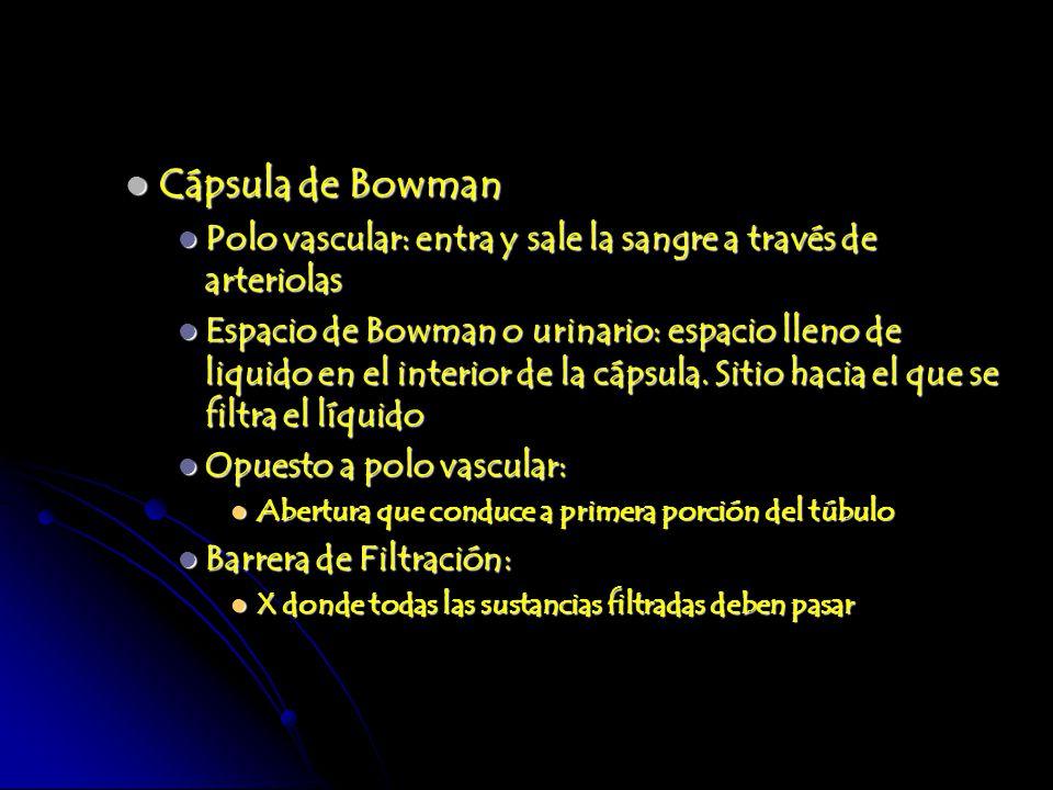 Cápsula de Bowman Cápsula de Bowman Polo vascular: entra y sale la sangre a través de arteriolas Polo vascular: entra y sale la sangre a través de art