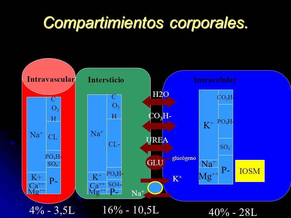 Compartimientos corporales. Na + K+ Ca ++ Mg ++ C O 3 H CL - PO 4 H- SO 4 - P- Intravascular IntersticioIntracelular Na + K+K+ Ca ++ Mg ++ C O 3 H CL-