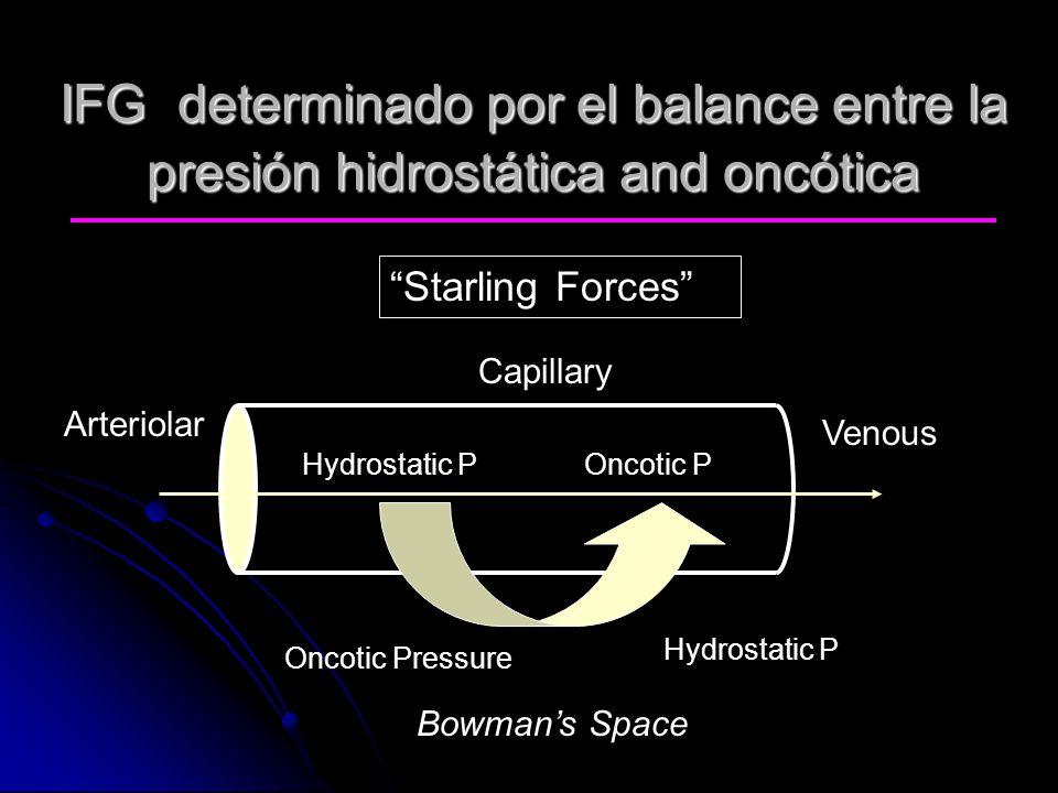 IFG determinado por el balance entre la presión hidrostática and oncótica Arteriolar Venous Hydrostatic P Oncotic Pressure Oncotic P Bowmans Space Cap