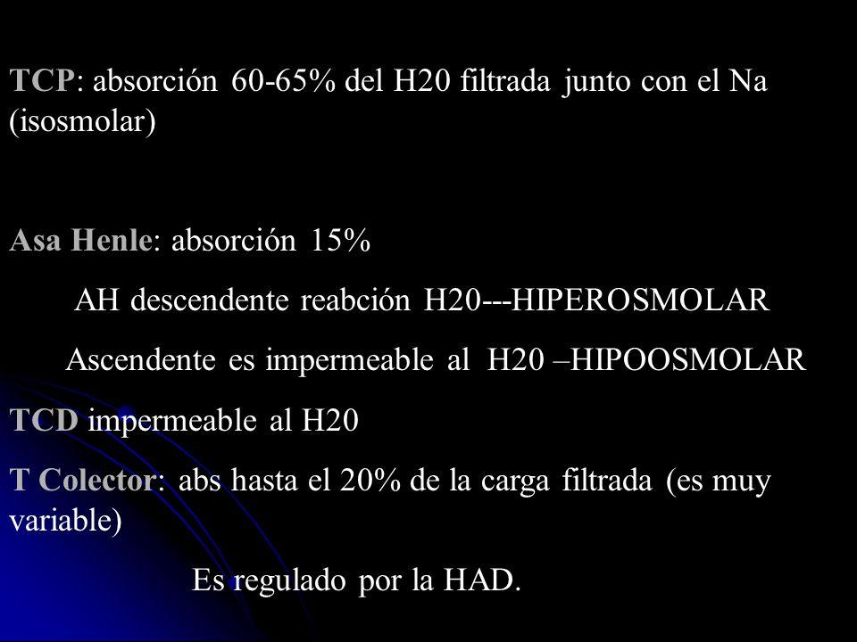 TCP: absorción 60-65% del H20 filtrada junto con el Na (isosmolar) Asa Henle: absorción 15% AH descendente reabción H20---HIPEROSMOLAR Ascendente es i