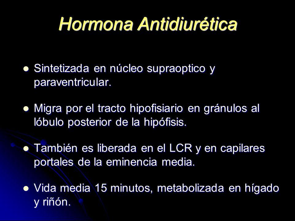 Hormona Antidiurética Sintetizada en núcleo supraoptico y paraventricular. Sintetizada en núcleo supraoptico y paraventricular. Migra por el tracto hi