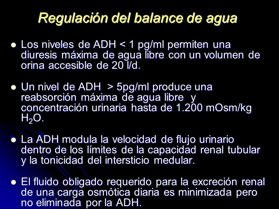 Regulación del balance de agua Los niveles de ADH < 1 pg/ml permiten una diuresis máxima de agua libre con un volumen de orina accesible de 20 l/d. Lo