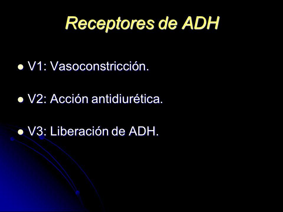 Receptores de ADH V1: Vasoconstricción. V1: Vasoconstricción. V2: Acción antidiurética. V2: Acción antidiurética. V3: Liberación de ADH. V3: Liberació