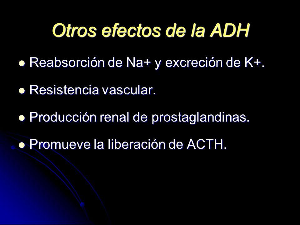 Otros efectos de la ADH Reabsorción de Na+ y excreción de K+. Reabsorción de Na+ y excreción de K+. Resistencia vascular. Resistencia vascular. Produc