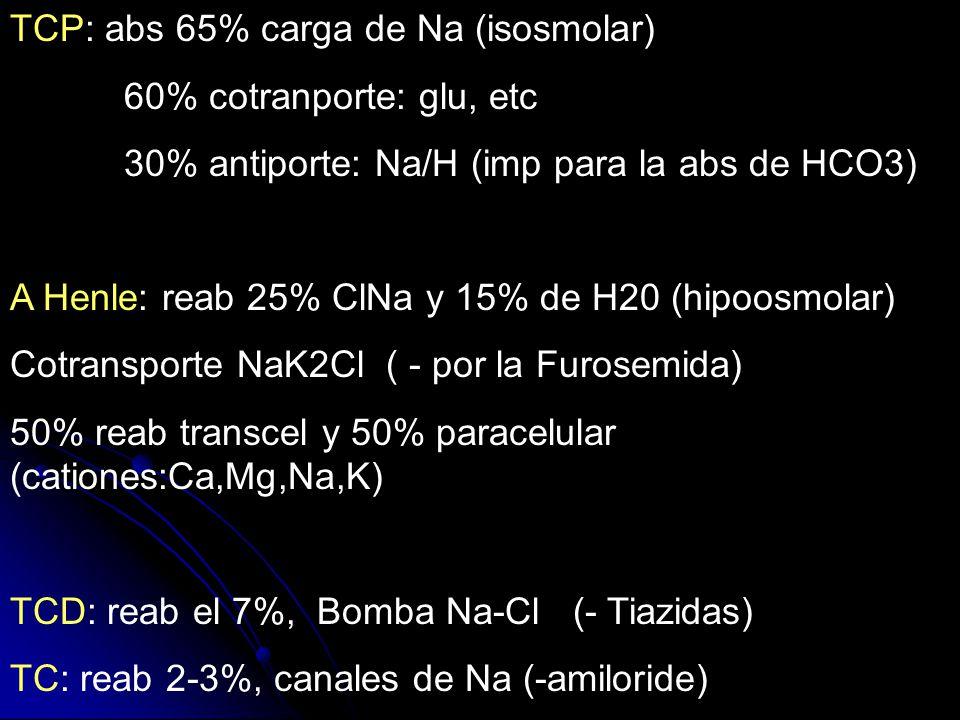 TCP: abs 65% carga de Na (isosmolar) 60% cotranporte: glu, etc 30% antiporte: Na/H (imp para la abs de HCO3) A Henle: reab 25% ClNa y 15% de H20 (hipo